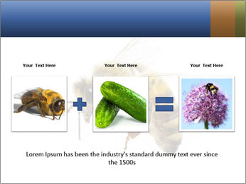 Bee On White Background PowerPoint Templates - Slide 22
