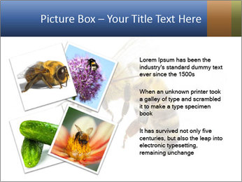 Bee On White Background PowerPoint Templates - Slide 23