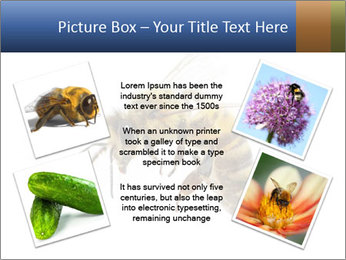 Bee On White Background PowerPoint Templates - Slide 24
