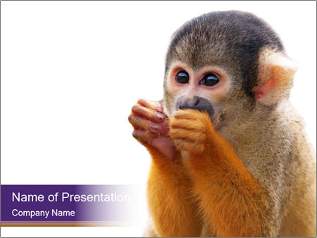 African Monkey PowerPoint Templates