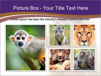 African Monkey PowerPoint Template - Slide 19