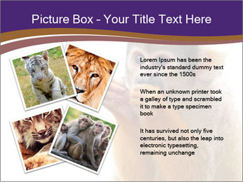 African Monkey PowerPoint Template - Slide 23