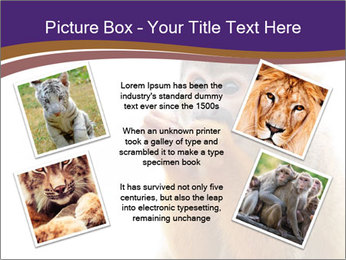African Monkey PowerPoint Template - Slide 24