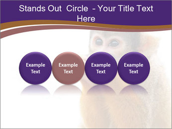 African Monkey PowerPoint Templates - Slide 76