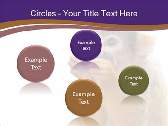 African Monkey PowerPoint Template - Slide 77