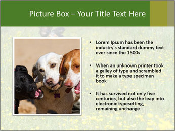 Happy Dog PowerPoint Template - Slide 13