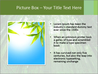 Green Landscape In Japan PowerPoint Templates - Slide 13