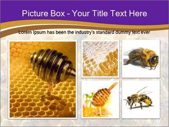 Beekeeping PowerPoint Templates - Slide 19