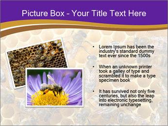 Beekeeping PowerPoint Templates - Slide 20