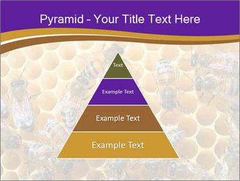 Beekeeping PowerPoint Templates - Slide 30