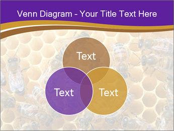 Beekeeping PowerPoint Templates - Slide 33