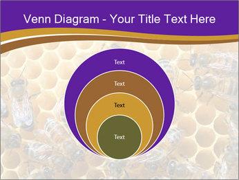 Beekeeping PowerPoint Templates - Slide 34