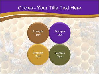 Beekeeping PowerPoint Templates - Slide 38