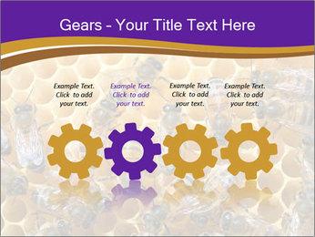 Beekeeping PowerPoint Templates - Slide 48