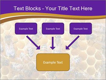 Beekeeping PowerPoint Templates - Slide 70