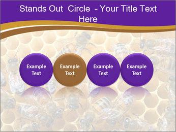 Beekeeping PowerPoint Templates - Slide 76