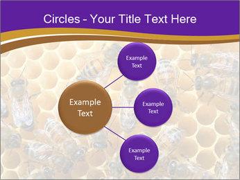 Beekeeping PowerPoint Templates - Slide 79