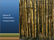 Forest In Sweden PowerPoint Templates