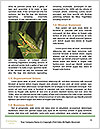 0000089335 Word Templates - Page 4