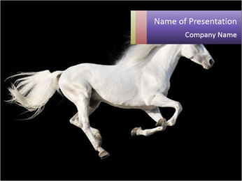 White Running Horse PowerPoint Template