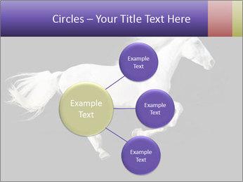 White Running Horse PowerPoint Templates - Slide 79