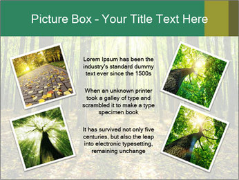 Green Forest PowerPoint Templates - Slide 24