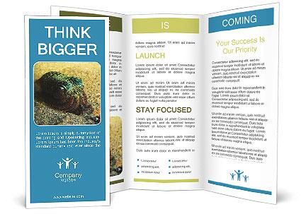 0000089394 Brochure Templates