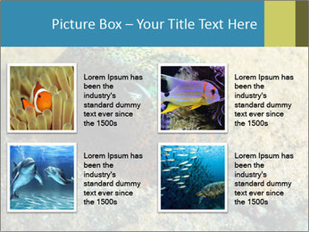 Great Marine Fish PowerPoint Templates - Slide 14