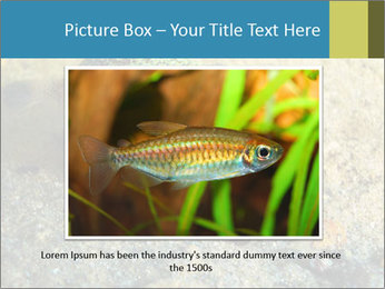 Great Marine Fish PowerPoint Templates - Slide 15