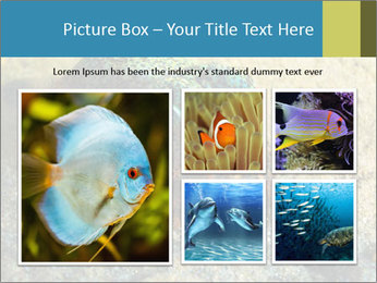 Great Marine Fish PowerPoint Templates - Slide 19