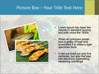 Great Marine Fish PowerPoint Template - Slide 20