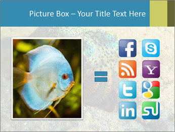 Great Marine Fish PowerPoint Templates - Slide 21