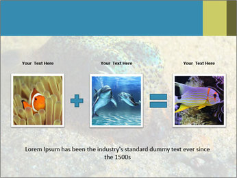 Great Marine Fish PowerPoint Templates - Slide 22
