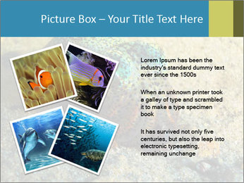 Great Marine Fish PowerPoint Templates - Slide 23