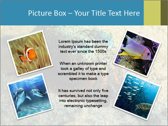 Great Marine Fish PowerPoint Templates - Slide 24