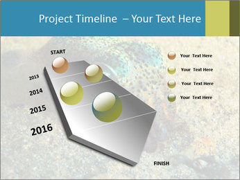 Great Marine Fish PowerPoint Templates - Slide 26
