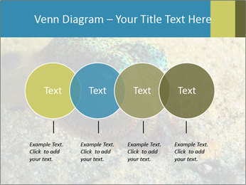 Great Marine Fish PowerPoint Templates - Slide 32