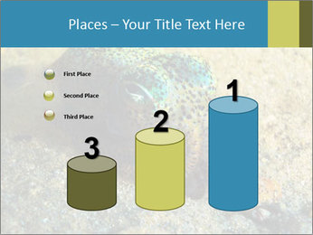 Great Marine Fish PowerPoint Template - Slide 65