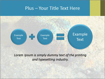 Great Marine Fish PowerPoint Templates - Slide 75