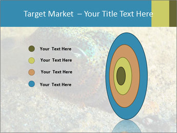 Great Marine Fish PowerPoint Templates - Slide 84