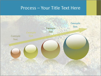 Great Marine Fish PowerPoint Templates - Slide 87