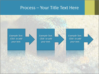 Great Marine Fish PowerPoint Templates - Slide 88