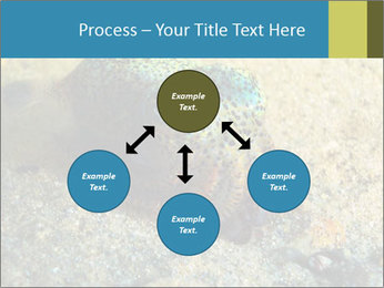 Great Marine Fish PowerPoint Templates - Slide 91