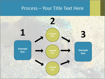 Great Marine Fish PowerPoint Templates - Slide 92
