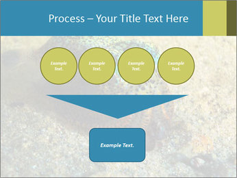 Great Marine Fish PowerPoint Templates - Slide 93