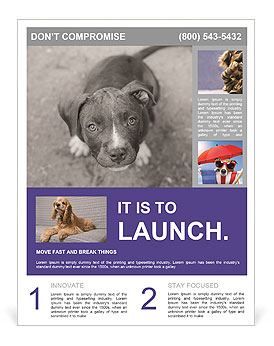 Pit bull puppy. Flyer Templates