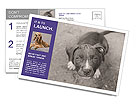 Pit bull puppy. Postcard Template