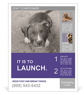 Pit bull puppy. Poster Templates