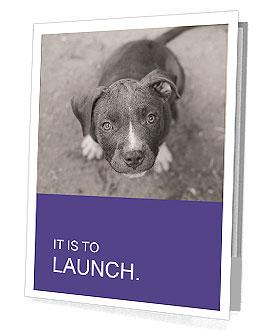 Pit bull puppy. Presentation Folder