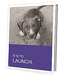 Pit bull puppy. Presentation Folder
